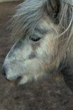 Portrait of cute pony Stock Image