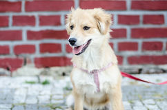 Portrait of cute puppy next to the brick wall stock images
