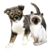 Portrait of the  cute puppy and thai kitten. Royalty Free Stock Image