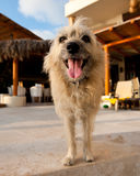 Portrait of cute shaggy dog Stock Image