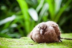 Portrait of a cute small brown bird in the garden Stock Photos