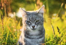Portrait of a cute striped cat in a Sunny bright green summer me. Adow stock photo