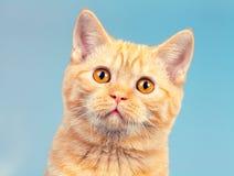 Portrait of cute surprised kitten Stock Image