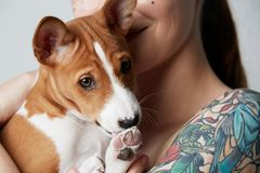 Portrait of a cute tattooed beautiful woman hugging and kissing her little puppy basenji dog. Love between dog and owner. Isolated over white background royalty free stock photo