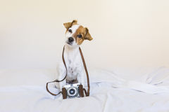Portrait of a cute young small dog over with a vintage camera. S. Itting on bed, white background. Love for animals concept. Pets indoors stock image