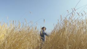 Portrait pretty young woman with short hair in jeans jacket standing on the wheat field at sunrise. Confident carefree stock video