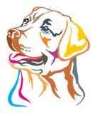 Portrait décoratif coloré d'illust de vecteur de labrador retriever illustration de vecteur