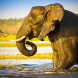 Portrait d'éléphant photos libres de droits