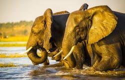 Portrait d'éléphant photographie stock libre de droits