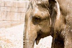 Portrait d'éléphant Photo libre de droits