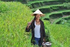 Portrait d'agriculteur organique traditionnel de riz avec ses outils image stock