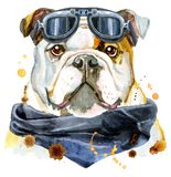 Portrait d'aquarelle de bouledogue illustration libre de droits