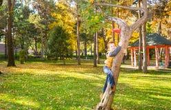 Portrait d'automne de bel enfant Petit garçon heureux sur l'arbre en parc dans la chute Photos stock