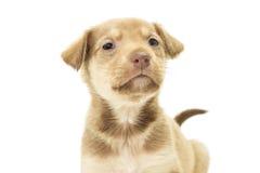 Portrait d'beaux chiens Image stock