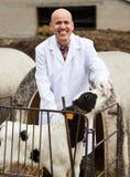 Portrait d'employé masculin mûr de vétérinaire dans la robe longue blanche avec la laiterie c Photo stock