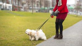 Portrait d'hiver des chiens de marche de femme enceinte Image stock