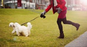 Portrait d'hiver des chiens de marche de femme enceinte Photos stock