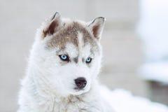 portrait d'hiver d'un chiot enroué mignon sur un fond neigeux de nature Images libres de droits
