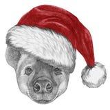 Portrait d'hyène avec Santa Hat Photos stock