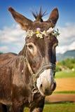 Portrait d'un âne avec une guirlande de fleur Photographie stock libre de droits