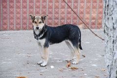 Portrait d'un ‹d'†de ‹d'†de chien égaré dans la pleine croissance pendant la saison d'automne photo libre de droits