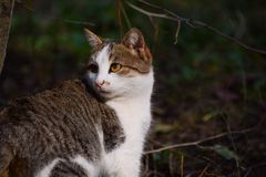 Portrait d'un beau chat dans un jardin, crépuscule Photo libre de droits