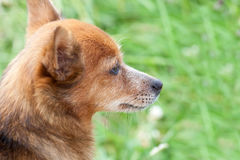 Portrait d'un beau chien contre une herbe verte Photos stock
