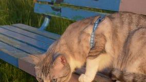 Portrait d'un beau jeune chat blond clips vidéos