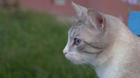 Portrait d'un beau jeune chat blond banque de vidéos