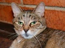 Portrait d'un chat Photographie stock libre de droits