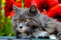 Portrait d'un chat Photographie stock