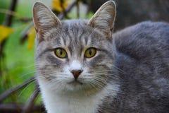 Portrait d'un chat Images stock