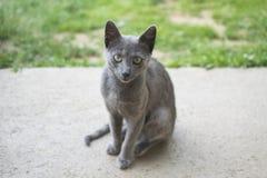 Portrait d'un chat gris Photographie stock