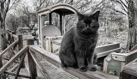 Portrait d'un chat noir Image stock