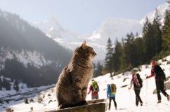 Portrait d'un chat se reposant dehors au soleil photographie stock libre de droits