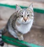 Portrait d'un chat sur le porche image stock