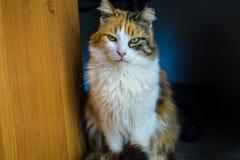 Portrait d'un chat velu coloré mignon Image stock