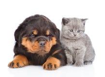 Portrait d'un chaton et d'un chiot écossais de rottweiler D'isolement Photographie stock