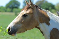 Portrait d'un cheval Photos stock
