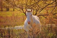 Portrait d'un cheval gratuit sur un champ en Argentine photo stock