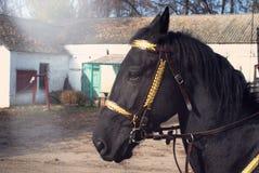 Portrait d'un cheval noir dans des poutres du soleil image libre de droits