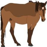 Portrait d'un cheval sauvage de désert de Namib Image stock