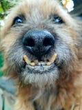 Portrait d'un chien image stock