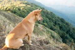 Portrait d'un chien Images libres de droits