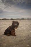 Portrait d'un chien Photographie stock libre de droits