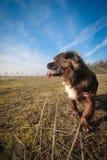 Portrait d'un chien Photo libre de droits