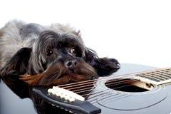 Portrait d'un chien avec une guitare Photo stock
