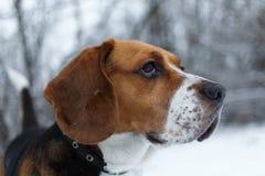 Portrait d'un chien de briquet en hiver, jour nuageux image stock