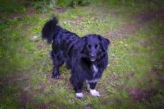 Portrait d'un chien métis noir marchant sur la pelouse photos libres de droits