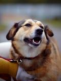 Portrait d'un chien non de race. Photo libre de droits